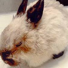 rabbit diseases