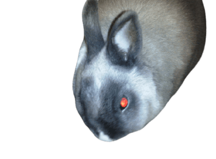 how to tell if my rabbit is mad ?