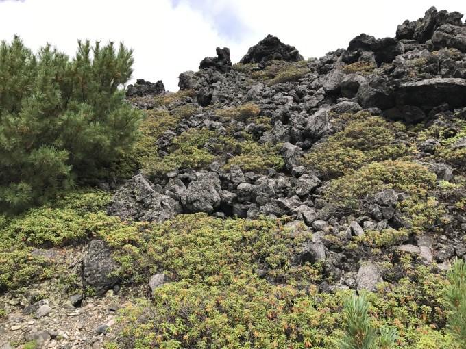 十勝岳 岩 溶岩