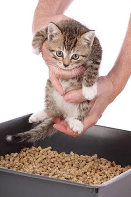 Как быстро приучить котенка к туалету