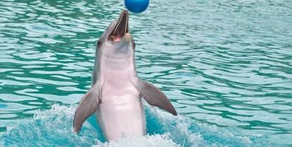 дельфинарий в Лазаревском