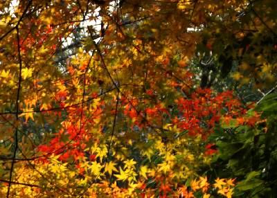 岐阜公園の紅葉