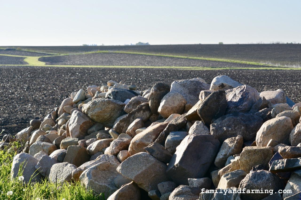 A Field With Rocks