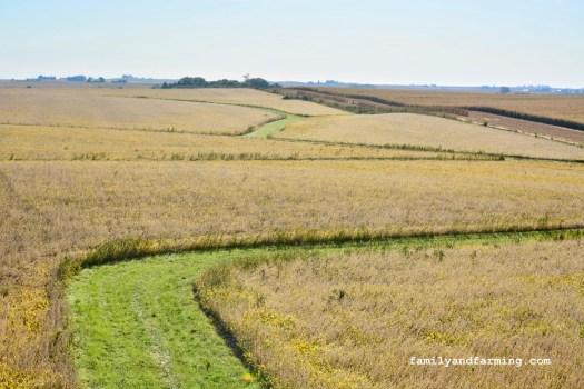 Soybean Field in Iowa