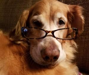 Visiting a dog psychic