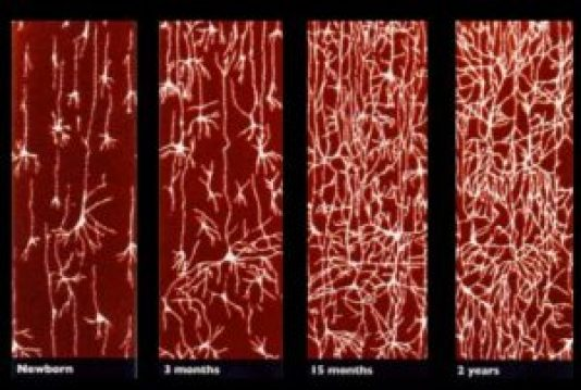 neural wiring