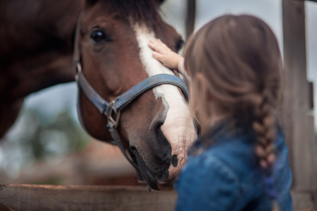 equine assisted therapy dhildren