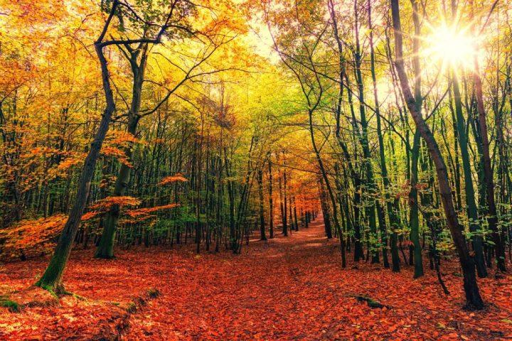 autumn-love-in-Tuscany