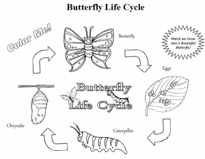 Discount Butterfly Growing Kit & FREE Butterfly Life Cycle