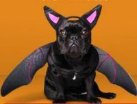 Halloween Costumes for Dog, Petco Halloween Pet Costume ...