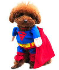 Funny Halloween Costumes for Dogs | Family Finds Fun