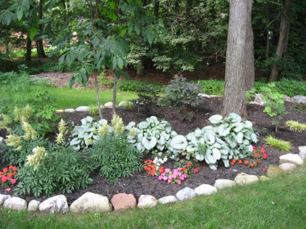 front yard ideas landscaping
