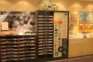 Egg display case at Delaware Museum Natural History