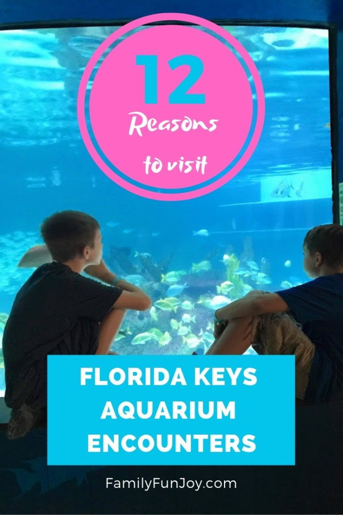 12 Reasons to visit Florida Keys Aquarium Encounters