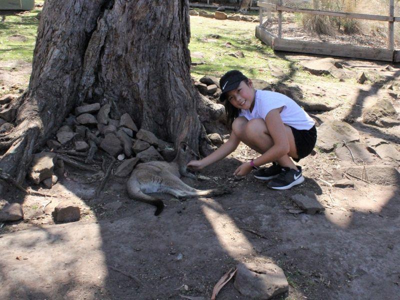 Bonorong Wildlife Santuary kid feeding and patting wallaby