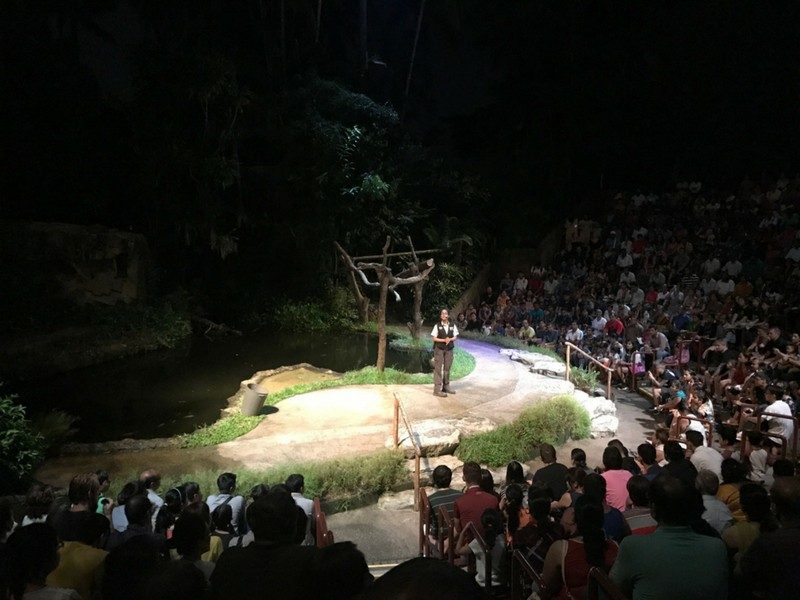 Night Safari Singapore Creatures By Night Show