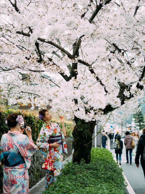 Popular Japanese Festivals For Families Cherry Blossom