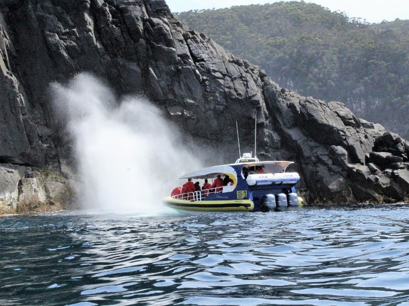 13 Things to Know About Bruny Island Cruises Before You Go
