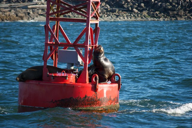 From now on, it's going to be Sea Lions galore