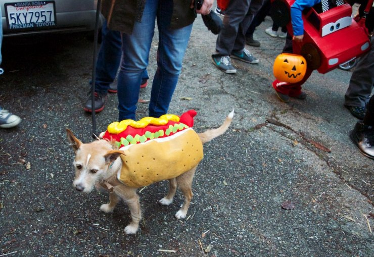 Followed closely by this hot-dog
