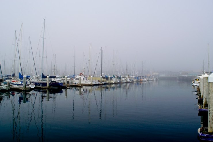 Fog making its way into the municipal marina in Monterey, a few days ago