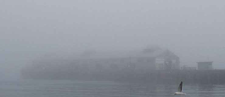 "The fish processing plant ""disappearing"" inside yet another patch of fog this afternoon"