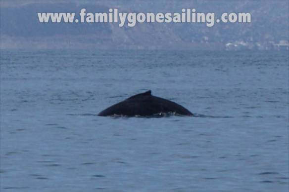 The first whale sighting of the trip brought good winds for the first day out