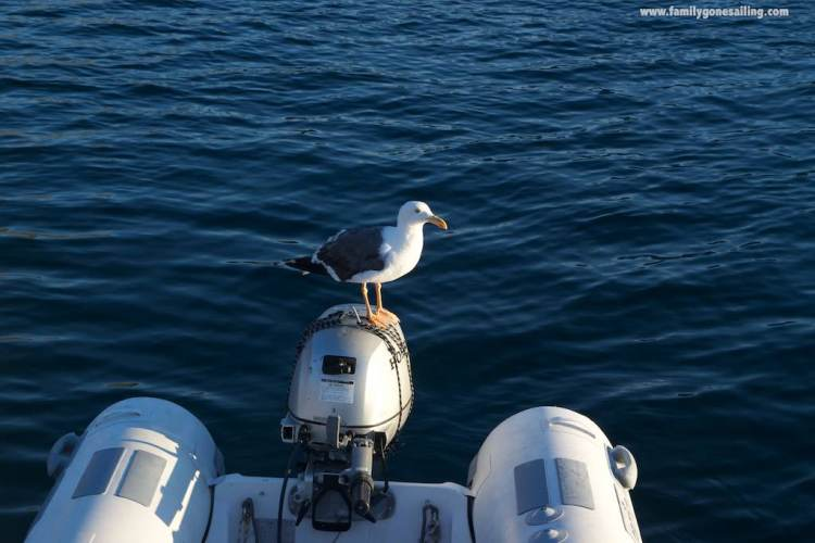 "The place is also full with Seagulls and Frigates. This guy left a ""present"" after staying on our outboard for an hour"