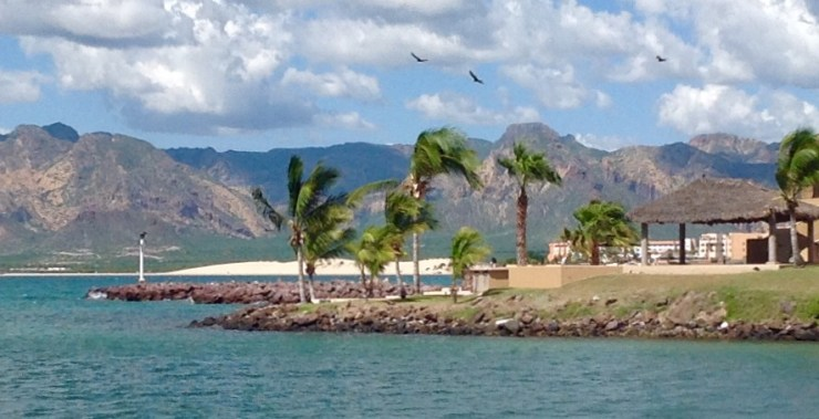 Palm trees bowing to the first gusts of Northers at the entrance of Marina Real, in Bahia Algodones