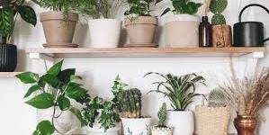10 نباتات منزلية تسبب مشاكل صحية للانسان