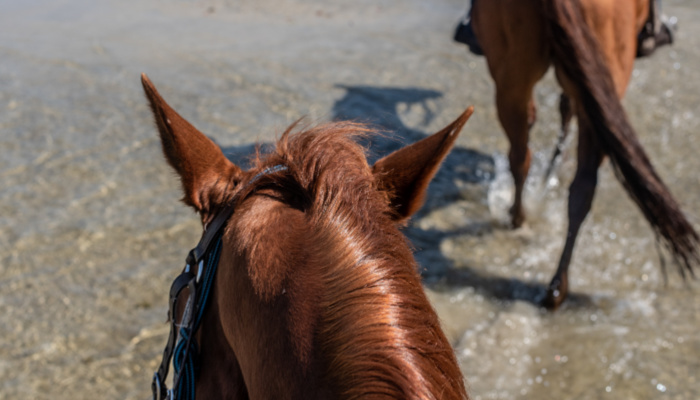 Noosa Horse Riding - My Experience - Family Holiday Destinations