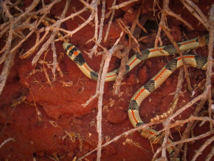 serpent1 (1 sur 1)