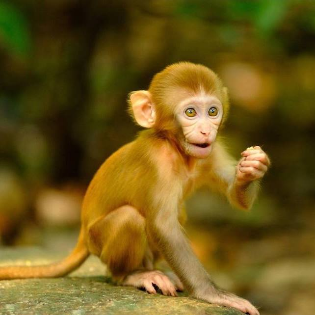 Hike with the monkeys hong kong