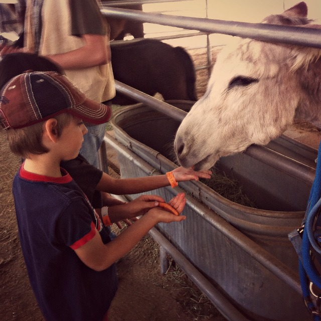 Feeding animals at the Gentle Barn