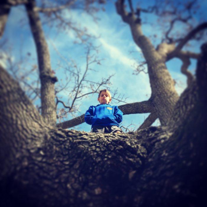Zane up a tree