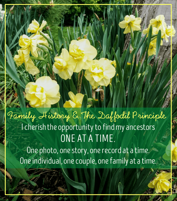 finding ancestors one at a time is like planting daffodils one at a time