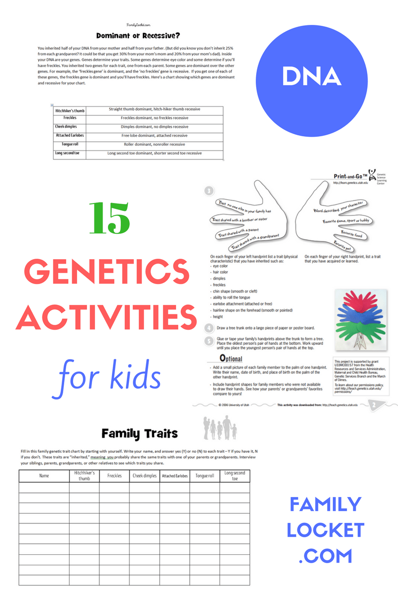 15 Genetics Activities for Kids – Family Locket [ 1200 x 800 Pixel ]