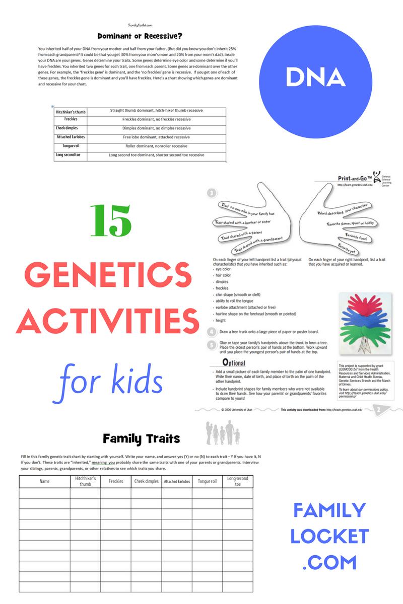medium resolution of 15 Genetics Activities for Kids – Family Locket