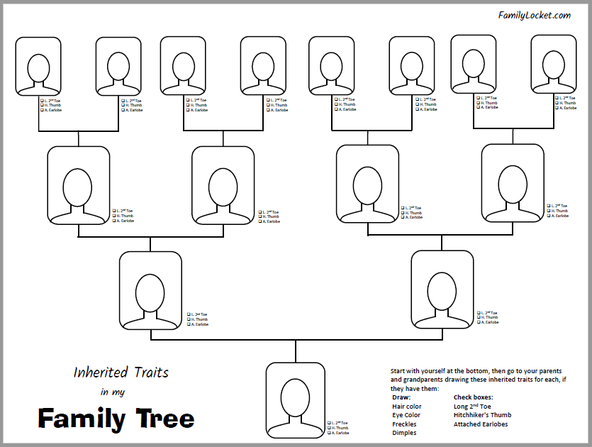 Inherited Traits Family Tree Worksheet Family Locket – Family Tree Worksheet