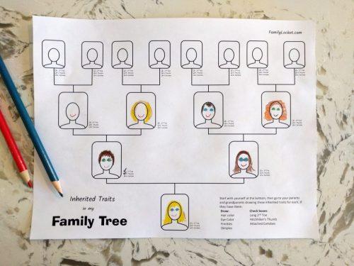 small resolution of Inherited Traits Family Tree Worksheet – Family Locket