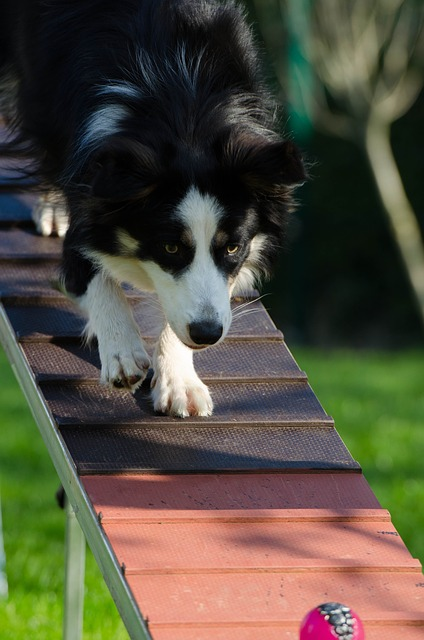 ee31b6082bfd1c22d2524518b7494097e377ffd41cb2144591f8c171af 640 - The Polite Pooch: Dog Training Ideas You Don't Want To Miss