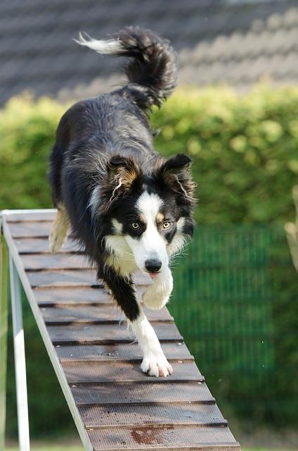 ee31b90d2dfd1c22d2524518b7494097e377ffd41cb2174096f7c87aa0 640 - Useful Canine Training Tips & Tools