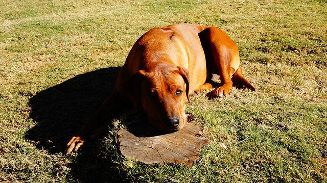 e83cb40b2cf01c22d2524518b7494097e377ffd41cb5124096f7c771a2 640 - Eliminating Problem Dog Behaviors With Proper Training
