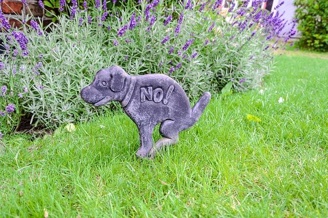 ea34b50729f1063ed1584d05fb1d4390e277e2c818b4154594f2c27daeed 640 - How To Help Your Dog Behave Better Fast