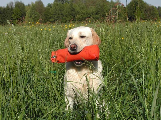 ee31b3072cf21c22d2524518b7494097e377ffd41cb514479cf1c870a3 640 - What It Takes To Properly Train Your Dog