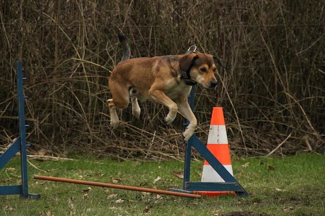 e136b70b29e90021d85a5854e34a4796e36ae3d01db7144795f2c97d 640 - Great Training Your Dog Tips Anybody Can Use
