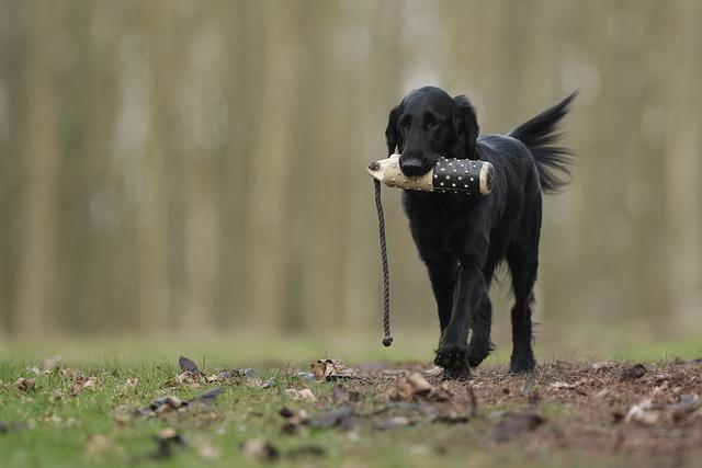 ea37b7082cf3083ed1584d05fb1d4390e277e2c818b415489cf5c178a7eb 640 - Good Dog- Bad Dog- The Basics Of Training