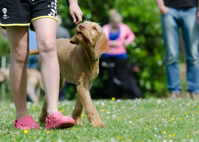 50e7d7444b55b108f5d08460962d317f153fc3e456547849752d7bd49e 640 - Canine Training Advice That All Dog Owners Should Read