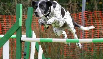 54e1d7454c55ab14f6da8c7dda793278143fdef8525474407c277fd7924d 640 - Useful Canine Training Tips & Tools