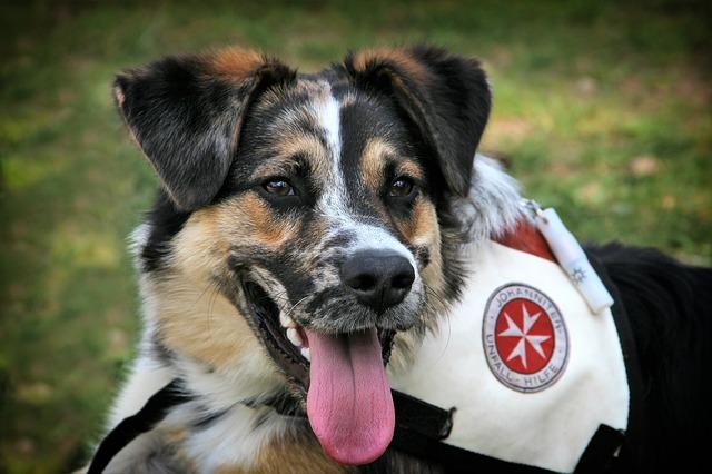 57e7dc434a56aa14f6da8c7dda793278143fdef8525477497d2972d09f4c 640 - You Can Take A Well-Trained Dog Anywhere